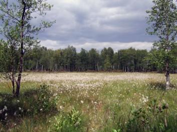 Naturpark Nuthe-Nieplitz