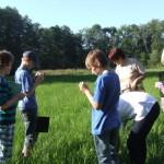 Junior Ranger lernen Pflanzen kennen Foto: Marina Czepl