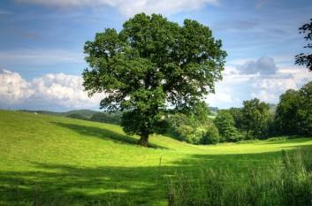 Geschützter Landschaftsbestandteil