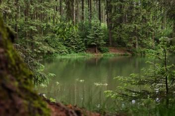 Nadelmischwald