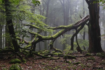 Nationalpark Hunsrück-Hochwald