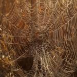 Spinnennetz Foto: Stephanie Schubert