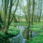 Naturschutzgebiet Planetal Foto: Naturparkverwaltung Hoher Fläming