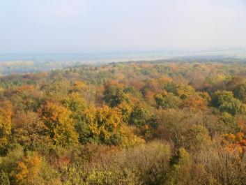 Laubmischwald